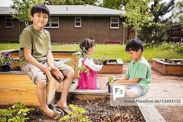 A Japanese American 6 year old boy and helps his 1 year old baby sister  and 4 year old brother plant a garden in planter boxes.