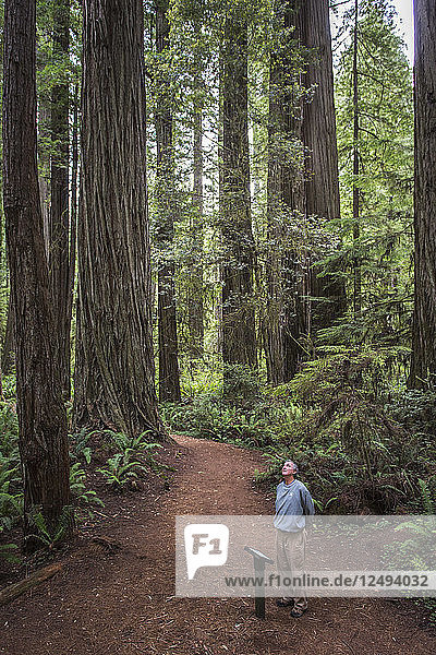 Senior Man Standing On A Trail Exploring Grove Of Old-growth Trees
