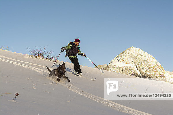 A woman and her dog backcountry powder skiing above Cascade Creek  San Juan National Forest  Durango  Colorado.