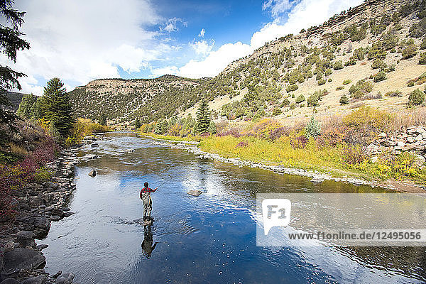 A Fly Fisherman On The Eagle River Surrounded By Fall Colors In Breckenridge  Colorado