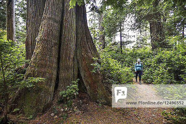 A Woman Walking By A Giant Cedar Tree While Hiking The Half Moon Bay Trail In Pacific Rim National Park