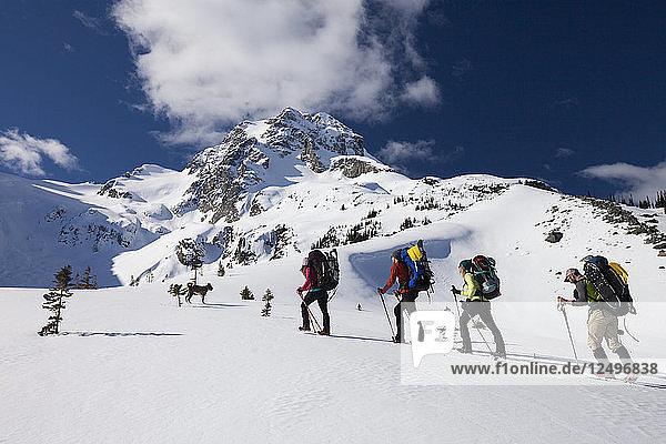 Four climbers follow a dog towards the summit of Joffre Peak  British Columbia  Canada.