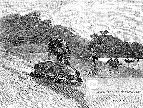 Turtle Catching  1886.Artist: Julian Ashton