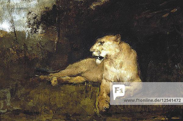 A Lioness  c1867-1910. Artist: John MacAllan Swan