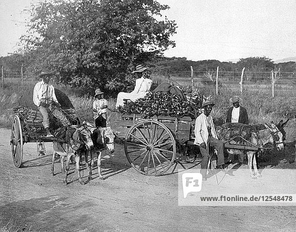 Wood carts  Jamaica  c1905.Artist: Adolphe Duperly & Son