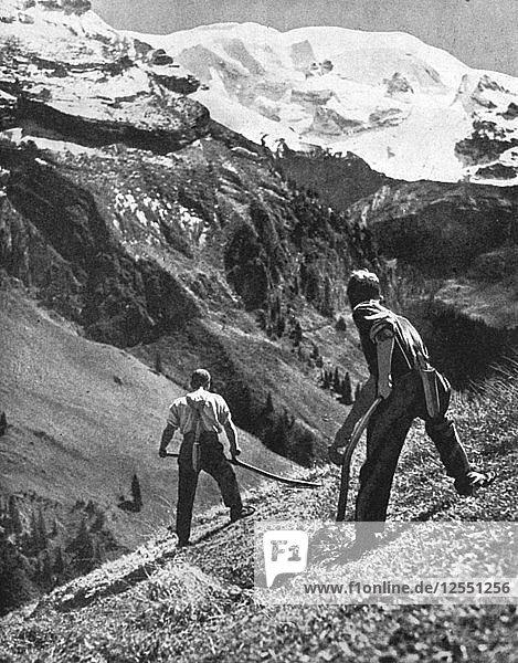 Peasant farmers haymaking at the glacier foot  Switzerland. 1936.Artist: F Hutzli