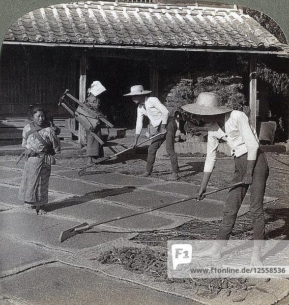 Farmers with bamboo rakes spreading millet on mats to dry for winter  near Yokohama  Japan  1904. Artist: Underwood & Underwood