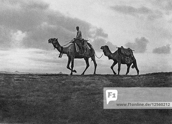 Camels in the desert outside Cairo  Egypt  c1920s. Artist: Unknown