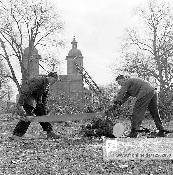 Trees being felled in front of the Sofia Albertina Church  Landskrona  Sweden  1960. Artist: Unknown