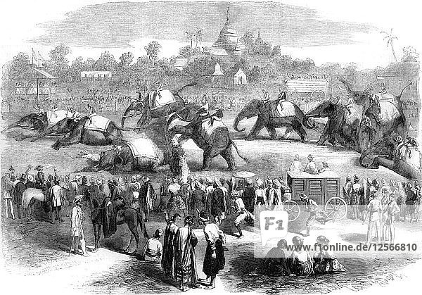 Elephant steeplechase at Rangoon  Burma  19th century(?). Artist: Unknown