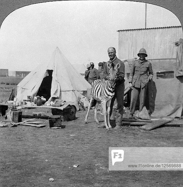 South African gunners with their pet zebra  East Africa  World War I  1914-1918.Artist: Realistic Travels Publishers