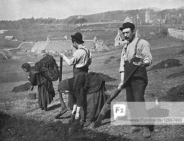 Planting potatoes in Skye  Scotland  1912. Artist: GW Wilson.