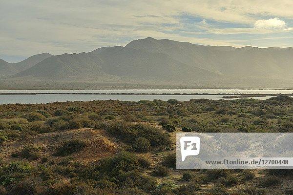 Salinas de San Miguel de Cabo de Gata. Almeria province  Andalusia  Spain.