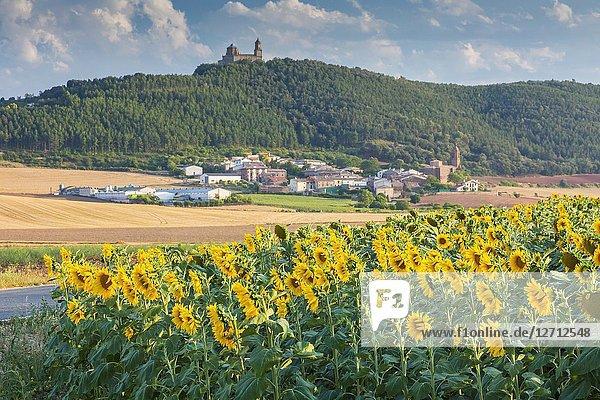 Sunflowers crop  Sorlada village and San Gregorio monastry. Tierra Estella. Navarre  Spain  Europe.