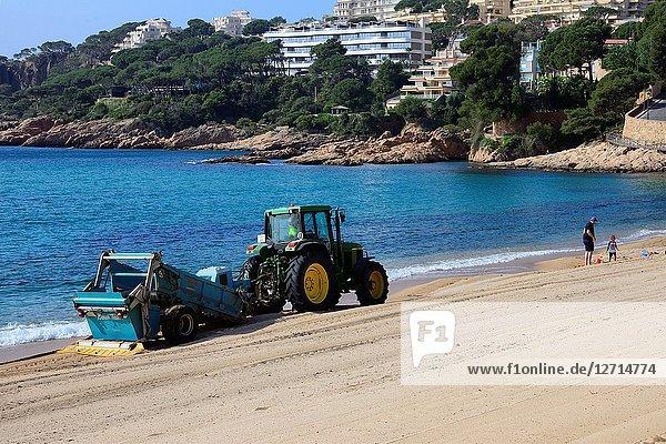Sant Feliu de Guixols resort  morning cleaning of Sant Pol sandy beach  Costa Brava  Baix Empordà  Catalonia  Spain  Europe