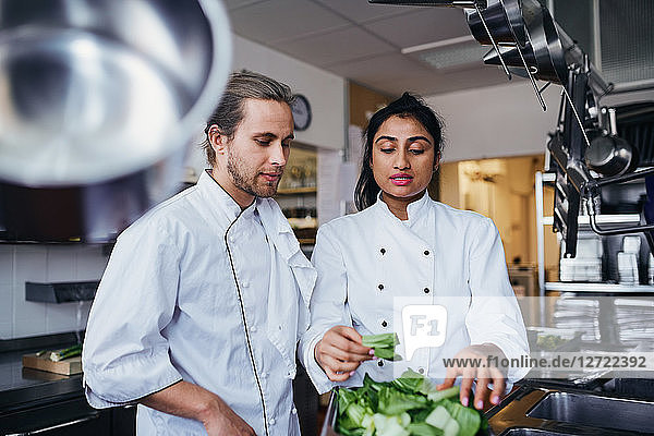 Female chef discussing with colleague over vegetable at commercial kitchen