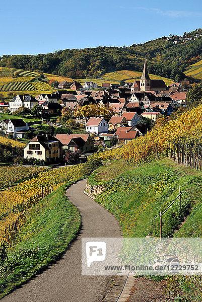 village of Niedermorschwihr in his vineyard in autumn Alsace  France