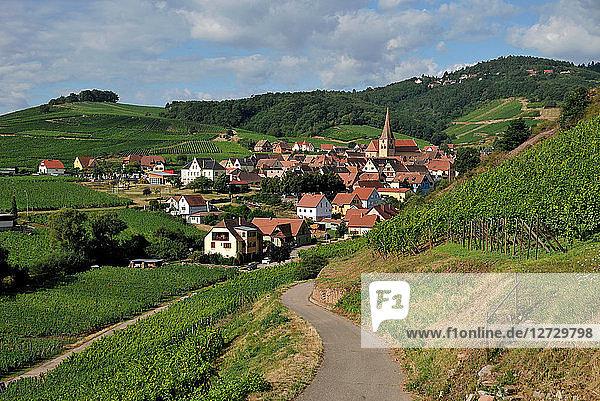village of Niedermorschwihr in his vineyard in summer Alsace  France