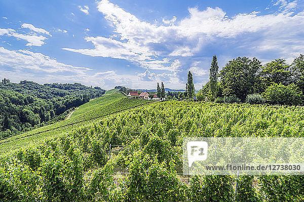 Austria  Styria  Gamitz  Wine estate and vinyards