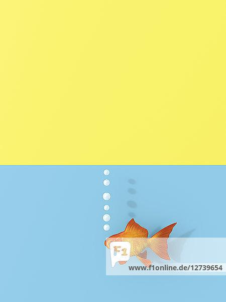 3D rendering  Goldfish swimming in water