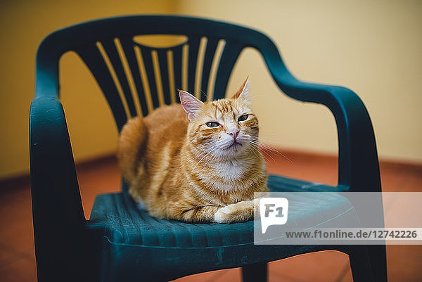 Portrait of ginger cat resting on a chair
