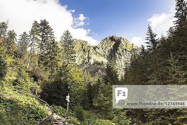 Poland  High Tatra Mountains  Tatra  Tatra National Park  View to Rysy