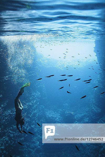 Young woman snorkeling underwater among fish  Vava'u  Tonga  Pacific Ocean