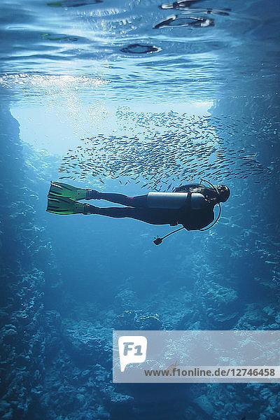 Young woman scuba diving underwater among school of fish  Vava'u  Tonga  Pacific Ocean