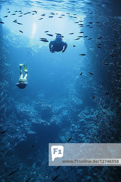 Man and woman snorkeling underwater among fish  Vava'u  Tonga  Pacific Ocean