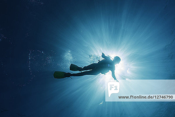 Sun shining behind woman scuba diving underwater  Maldives  Indian Ocean