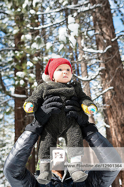 Father holding up baby son in winter forest  South Lake Tahoe  California  USA