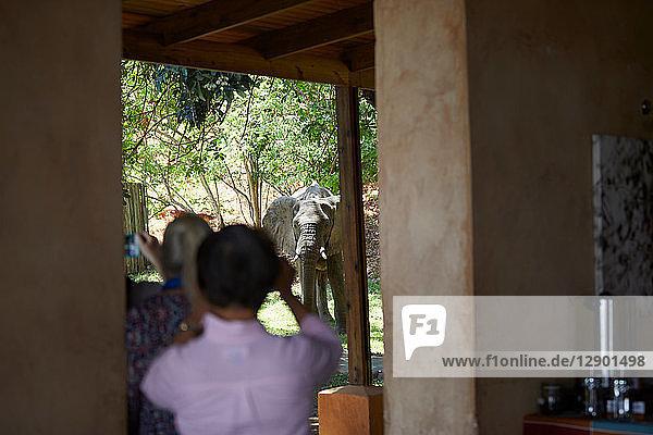 Touristen beim Fotografieren von Elefanten,  Sambesi,  Sambia