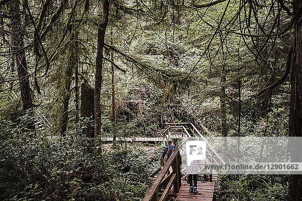 Vater und Tochter wandern im Wald  Tofino  Kanada