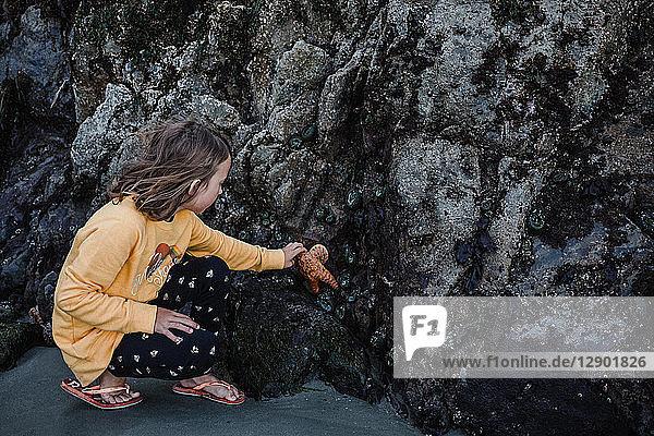 Mädchen sammelt Seesterne von Felsen auf