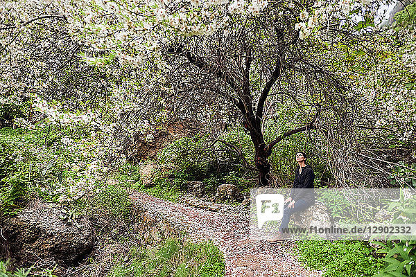 Female tourist looking up at tree blossom  Las Palmas  Gran Canaria  Canary Islands  Spain