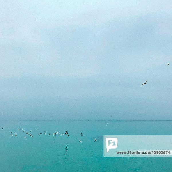 Vogelschwarm landet auf See