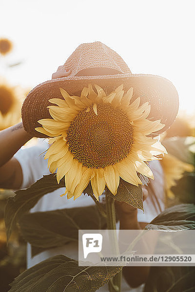 Sunflower with hat