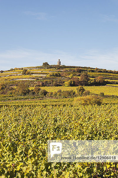 Germany Rhineland-Palatinate  Pfalz  German Wine Route  Flaggenturm on Fuchsmantel hill and vineyards in autumn colours