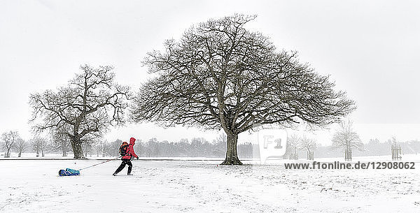 UK  woman pulling sled through snow-covered winter landscape