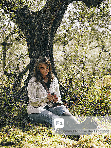 Italy  woman sitting under olive tree using cell phone