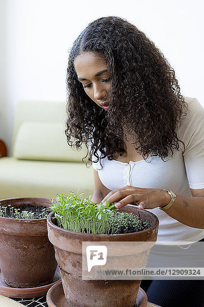 Woman looking at saplings  growing in plant pot at home