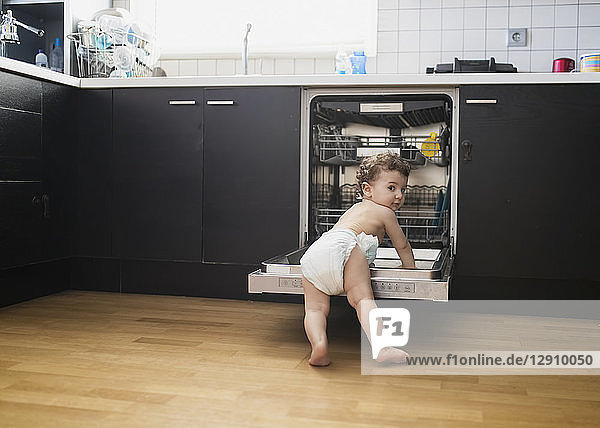 Portrait of baby boy wearing diaper exploring dishwasher in the kitchen