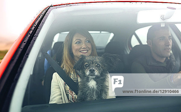 Happy couple with small dog in car