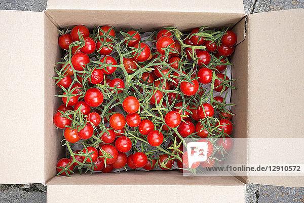 Organic tomatoes in a box