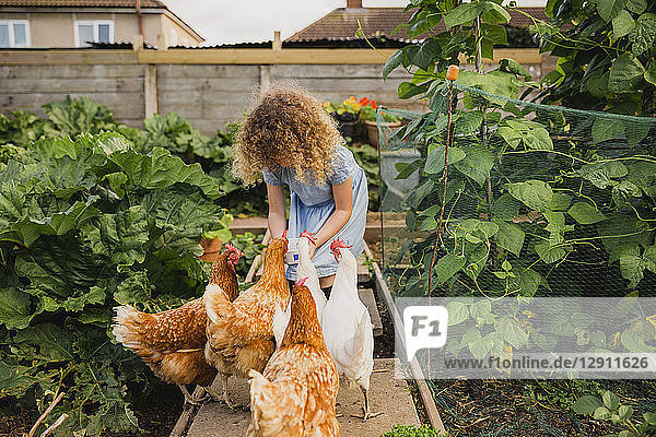 Little girl feeding chickens in allotment
