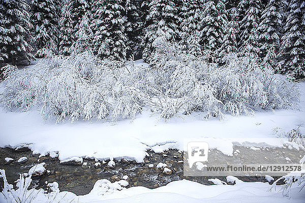 Austria  Salzburg State  Altenmarkt-Zauchensee  snowy bushes on a brook