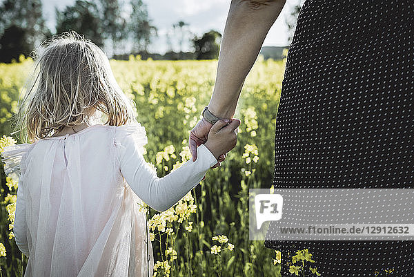 Back view of little girl walking with her mother hand in hand in rape field
