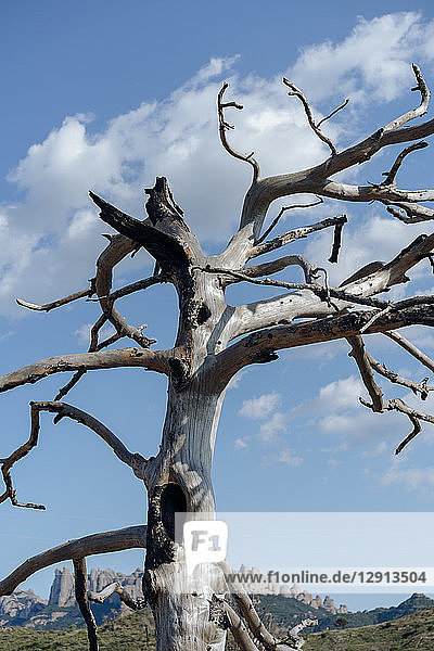 Spain  Barcelona  Montserrat  deadwood