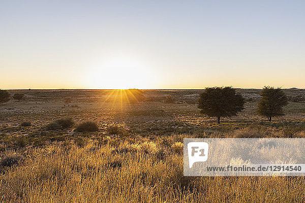 Botswana  Kgalagadi Transfrontier Park  Kalahari  landscape at sunrise