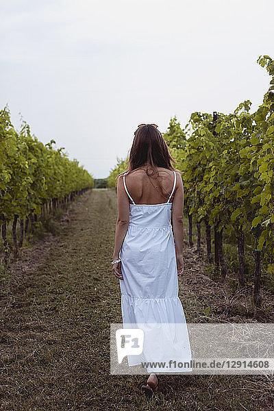Woman wearing white summer dress  walking in vineyard  rear view